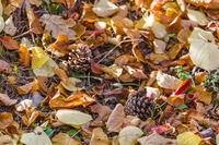 Herbst Laub auf dem Waldboden