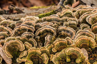 Mushrooms on a tree trunk in the middle of the forest