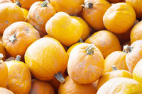 Exhibition sale and distribution of pumpkins by road