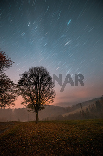 Single tree next to path, star trails in the sky, night long exposure photo.