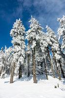 Winter im Riesengebirge bei Janske Lazne, Tschechien