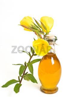 Öl aus Nachtkerzen