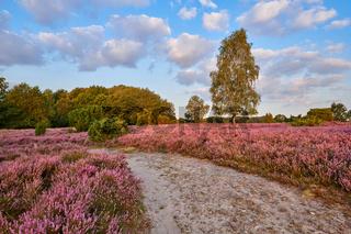 Wanderweg Lueneburger Heide
