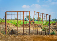 Rusty gate of farm enclosure in countryside
