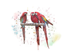 Macaw Parrots watercolor painting