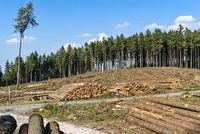 Abgeholzte Bäume im Wald