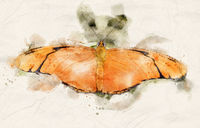 Watercolor Julia Heliconian butterfly
