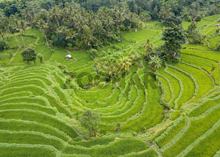 Aerial view of rice terraces in Bali