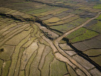 Aerial view of paddy fields