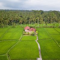 Aerial view of Ubud countryside in Bali