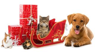 Haustiere an Weihnachten