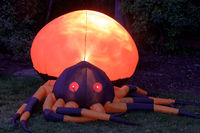 Inflatable Giant Spider Glowing in the Dark.