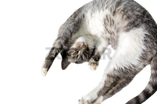 Flying or jumping funny tabby kitten cat isolated on white background. Copy space. Greeting card template