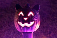 Cat Halloween Carved Pumpkin Glowing in the Dark.