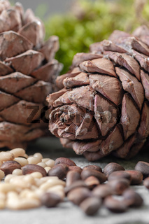 Two cedar cones close-up on gray background. Vertical frame.