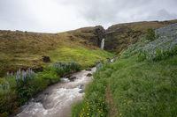 Wasserfall und Lupinen in Island