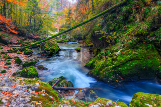 Creek deep in mountain forest in Transylvania