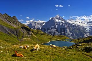 Bachalpsee und das Wetterhorn hinten, Grindelwald, Berner Oberland, Schweiz