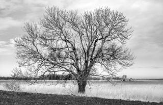 Baum am Lebbiner Bodden