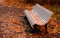 Empty white wooden bench and autumn leaves on it in the park.Golden autumn.