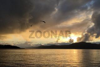 Sonnenuntergang am Fjord in Norwegen nach Gewitter mit Möwen