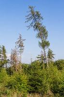 Waldschäden und Aufforstung