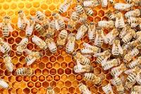 viele arbeitende Honigbienen