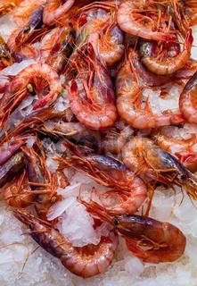 Fresh prawns at a fish market