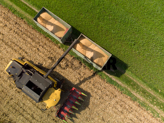 Maiserntemaschine beim Abladen von Maiskorn