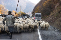 Sheeps on Georgian Military Road