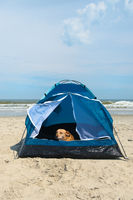 Camping dog with tent at the beach