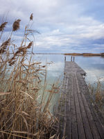 Jetty on the lake with reed in winter
