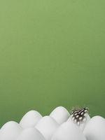 Ostern Hintergrund weiße Ostereier mit Feder auf grün