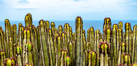 Kakteenpanorama an der Küste von Fuerteventura