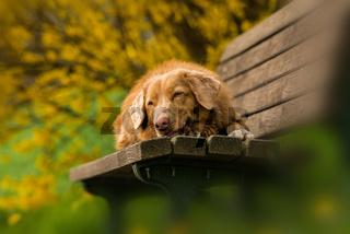 Dog on a park bench