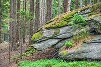 Steinformation mit dem Aussehen eines Drachenkopfes im Wald beim Mandelstein im Waldviertel