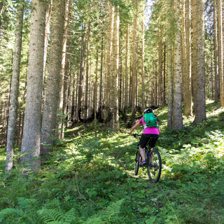 Active sporty woman riding mountain bike on forest trail .