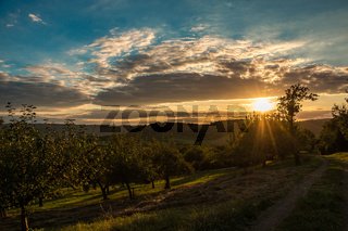 Sunset sky and fields of apple trees