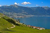Postkarten Landschaft mit Weinbergen am Genfersee, Rivaz, Lavaux, Waadt, Schweiz