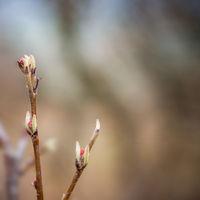 Frische Triebe an Zweigen im Frühling