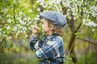 Young blonde boy posing in blooming orchard in springtime.
