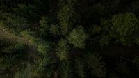 Dunkler Wald von Oben