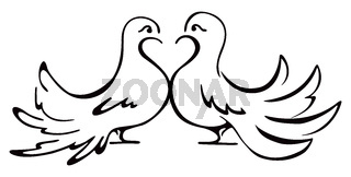 Beloved couple doves on illustration
