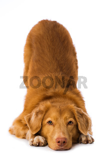 Dog makes a servant on white background
