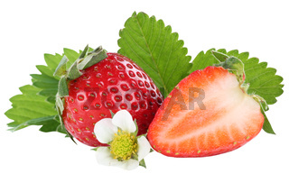 Erdbeere Erdbeeren Beeren Beere Frucht Früchte Blätter Freisteller freigestellt isoliert