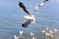 Flock of seagulls at Bangpu Recreation Center