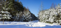 Forest road is littered with snow in winter period. February