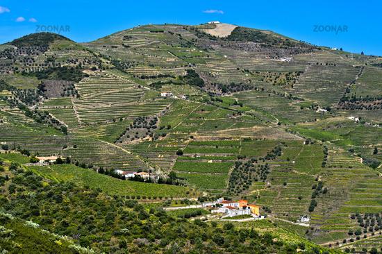 Weinberge in der Portweinregion Alto Douro bei Pinhao, Portugal