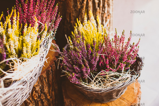 Floral shop with autumn decor outside with heather flowers in basket