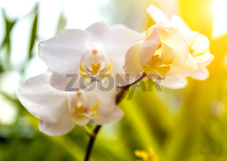 Orchids exotic background spring day sunset tone